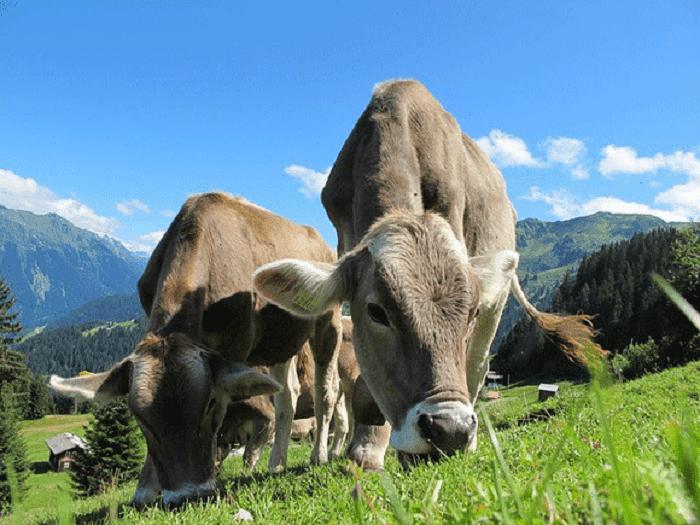 4 Tipps für Familienurlaub in Österreich